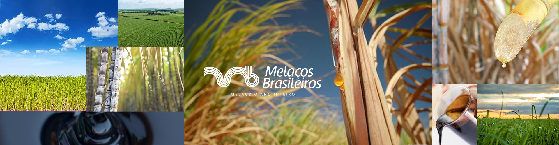 Banner-Melacos-2019-002
