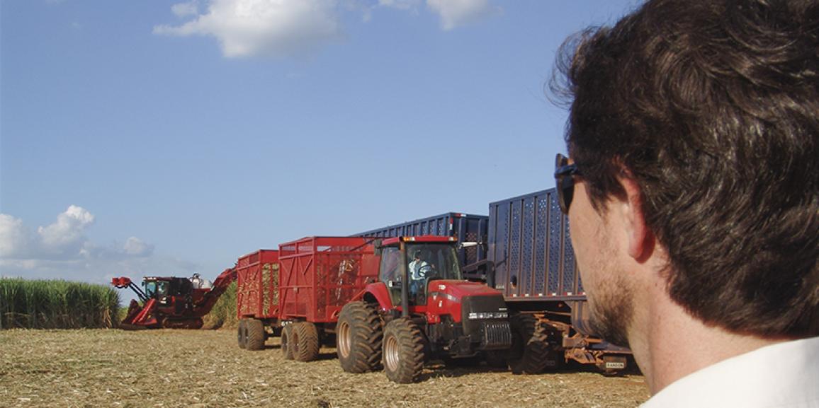 Governo Federal apoia o setor canavieiro com financiamentos