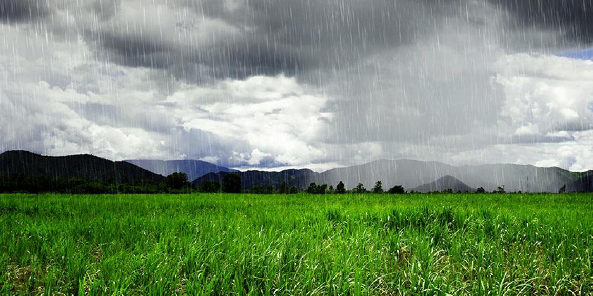 Chuvas devem aliviar seca de janeiro em áreas de café e cana