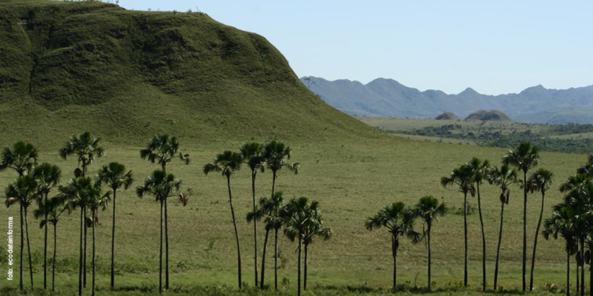 Embrapa pesquisa cana-de-açúcar em área de expansão no Cerrado