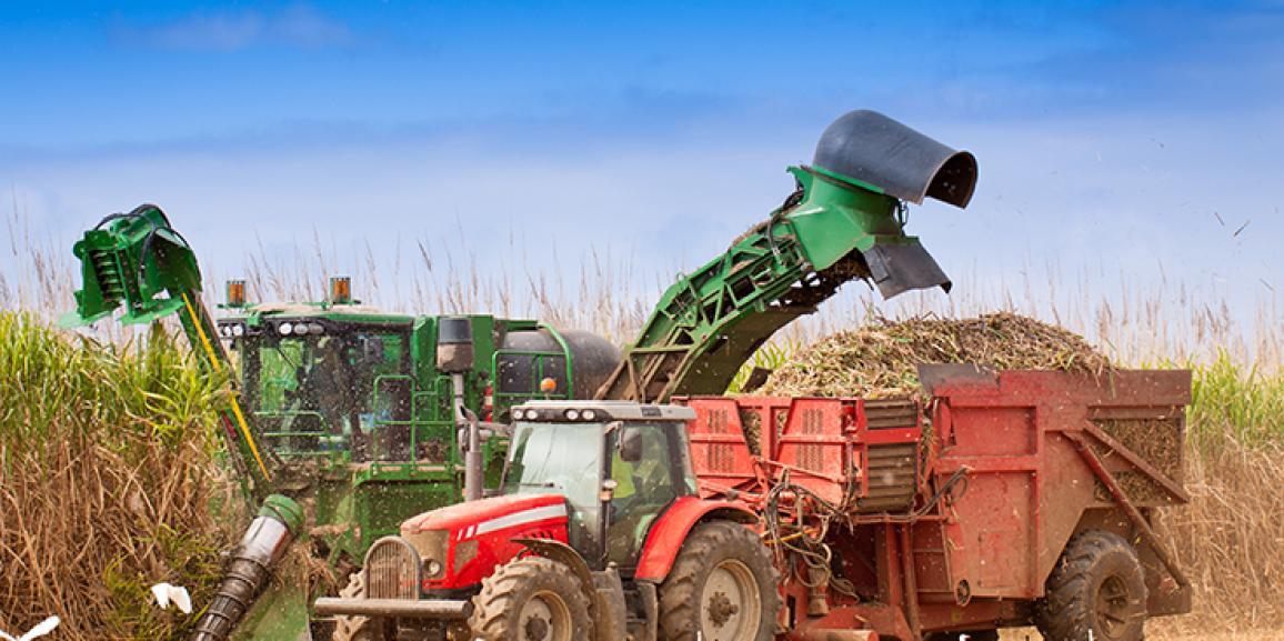 Uso de lonas será obrigatório no transporte de cana de açúcar a partir de 2017