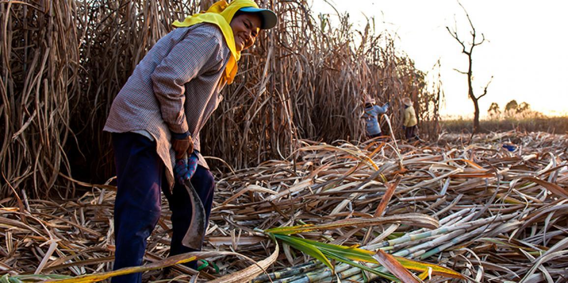 Moagem da cana cresce 5,63% no Centro-Sul do país, aponta Única