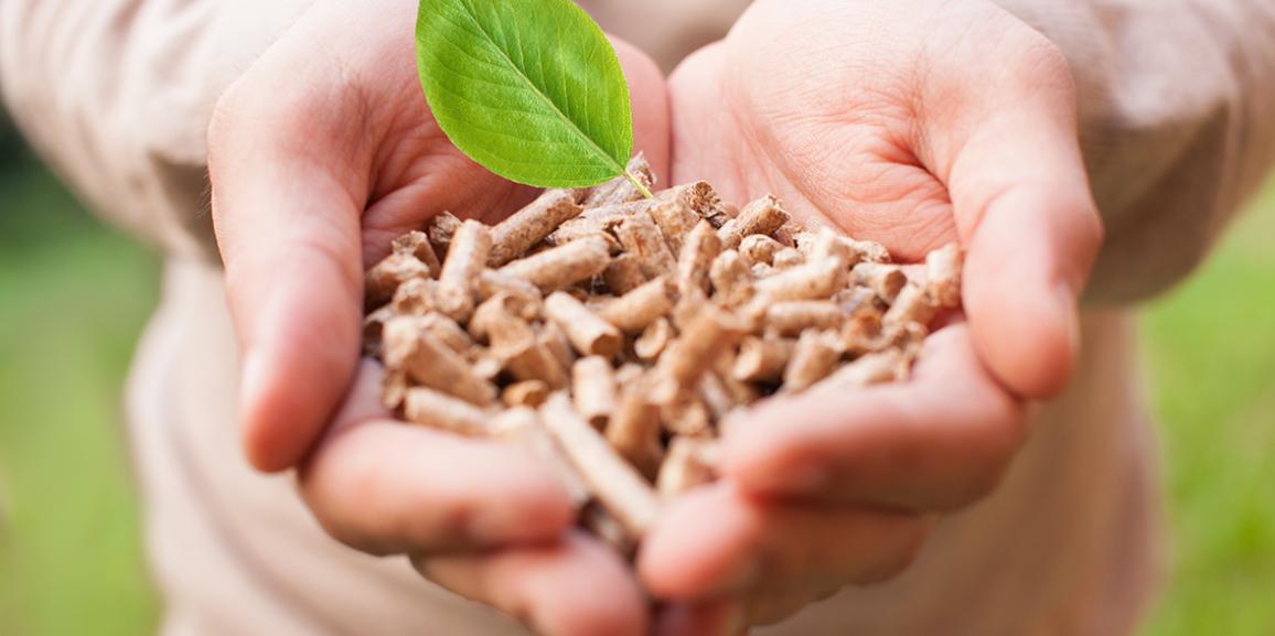 Energia de biomassa tem espaço para crescer