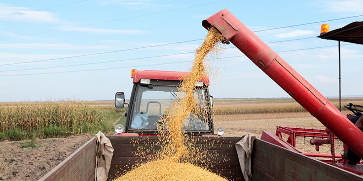 Safra de grãos este ano deverá ser 0,6% maior, mostra IBGE