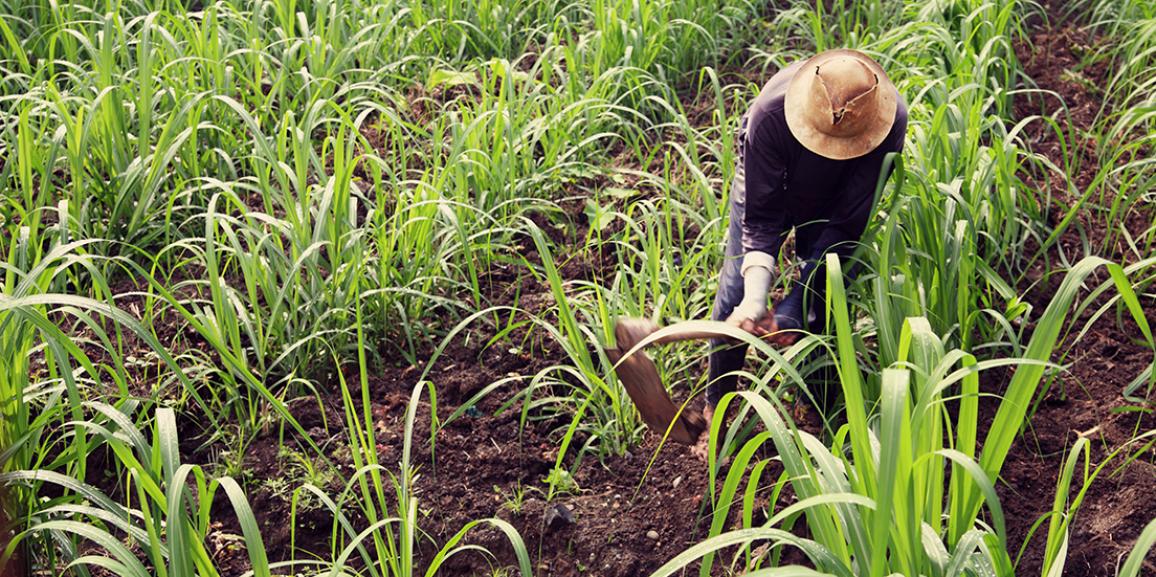 Colheita de cana trimestral da BrasilAgro sobe 36%