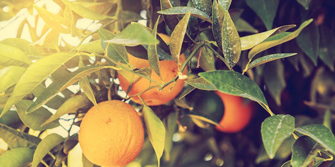 Frutas cítricas atingiram elevados patamares em março