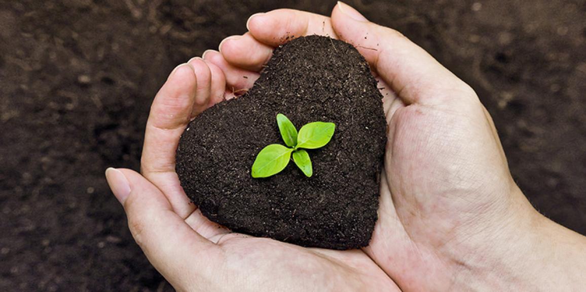 Pequenos agricultores apostam na produção de adubo para hortaliças
