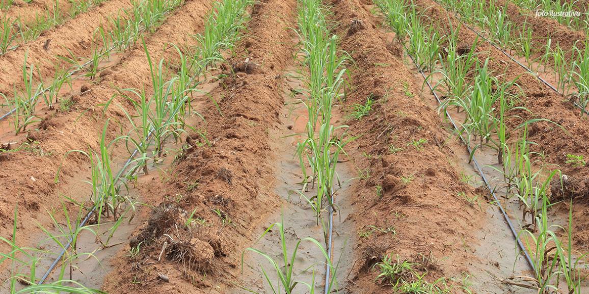 Resultado de imagem para usina canavial irrigação