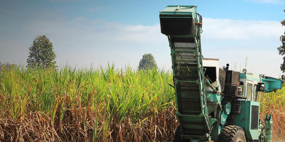 Safra 2017/18 de cana-de-açúcar começa no Brasil